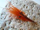 Heinz-Günther Sareyka bei Flyfishing Europe, Fliegenbinden, Fliegenfischen auf Meerforelle